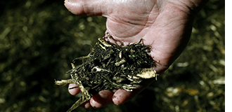 Plants and Soil in Hand